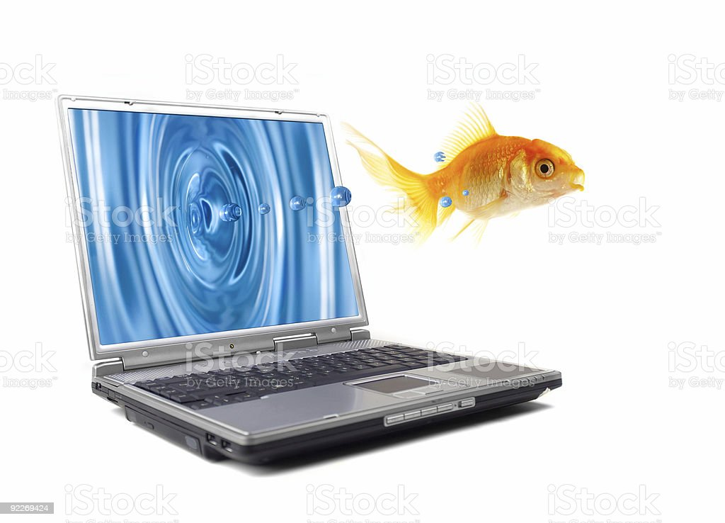 fish jumps royalty-free stock photo