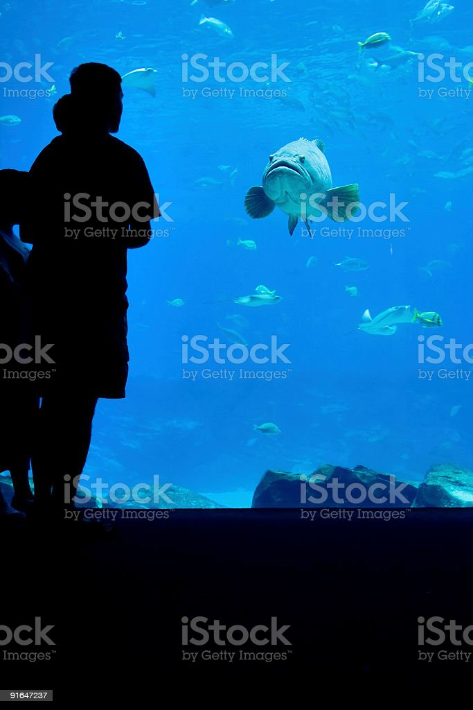 Fish looking at man and child stock photo