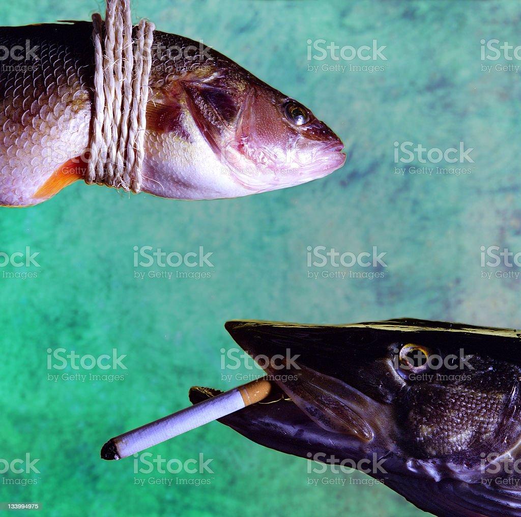 Fish Mafia royalty-free stock photo