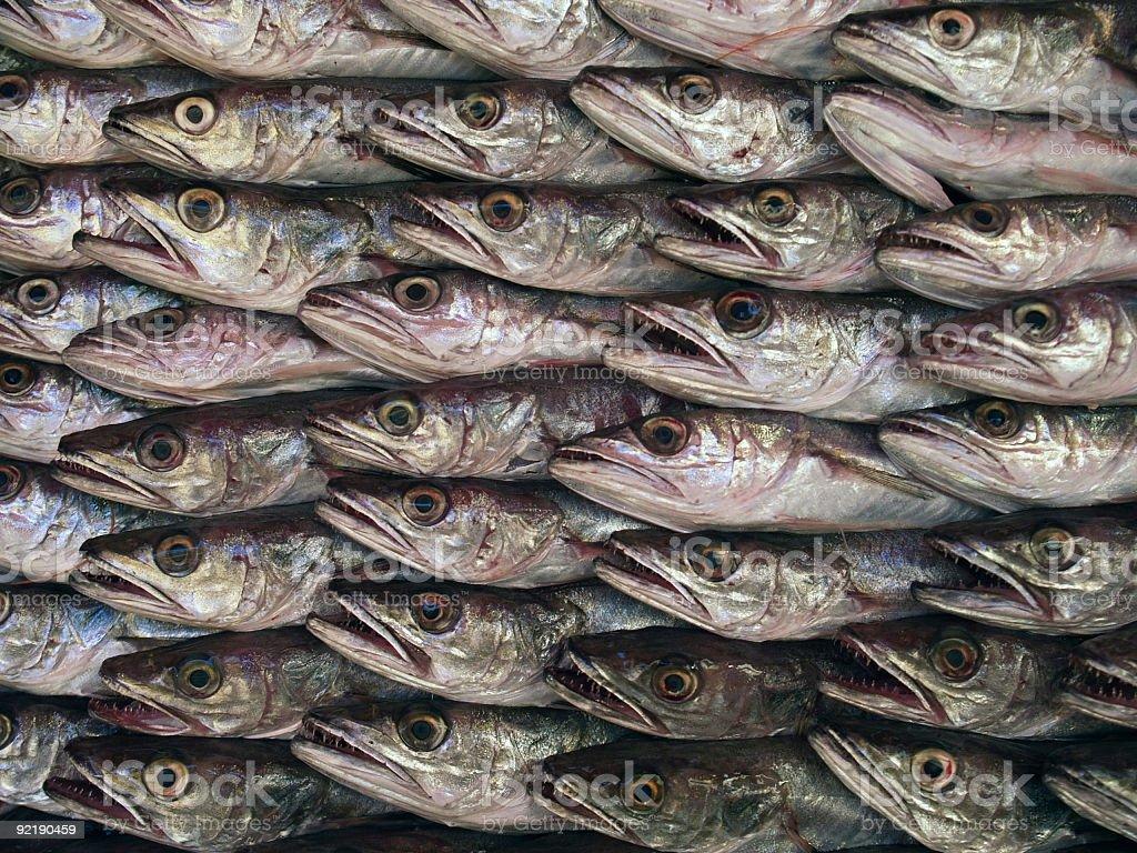 Fish market 6 royalty-free stock photo