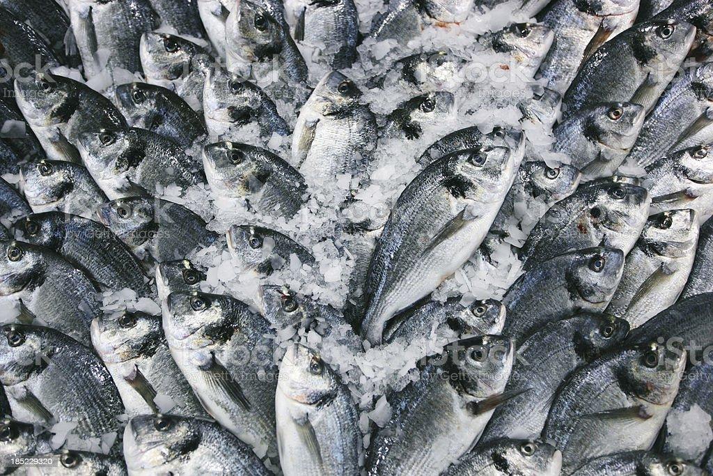 fish market - gilt head bream stock photo