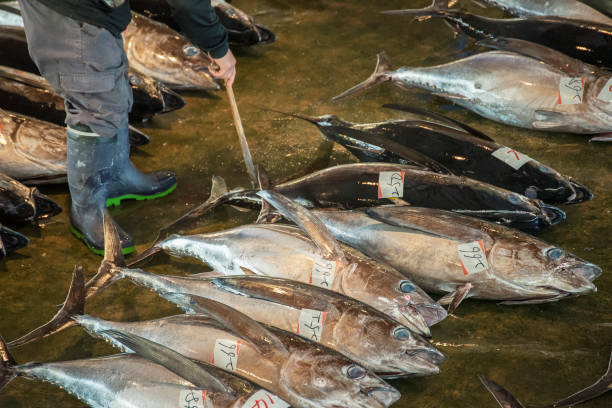 fish market in japan - fishman imagens e fotografias de stock