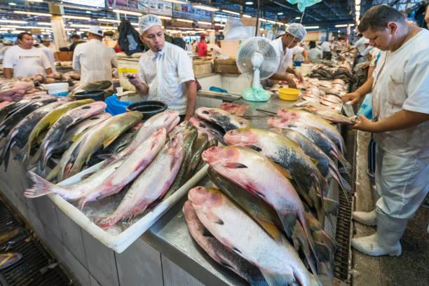 Fischmarkt in Manaus, Brasilien – Foto