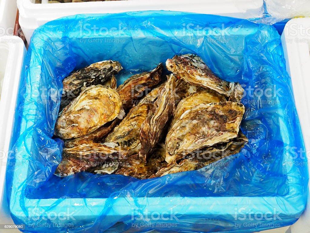 Fish Market, Oyster stock photo