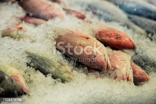 Red snapper and bass in a display case on ice.