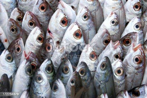 many fishes at the fish market.