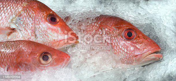 istock fish market red snapper on ice 1149702204