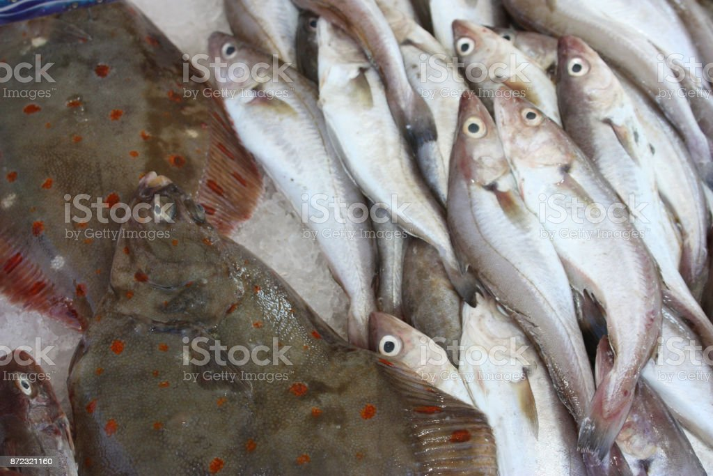 Fish market  sea fish stock photo
