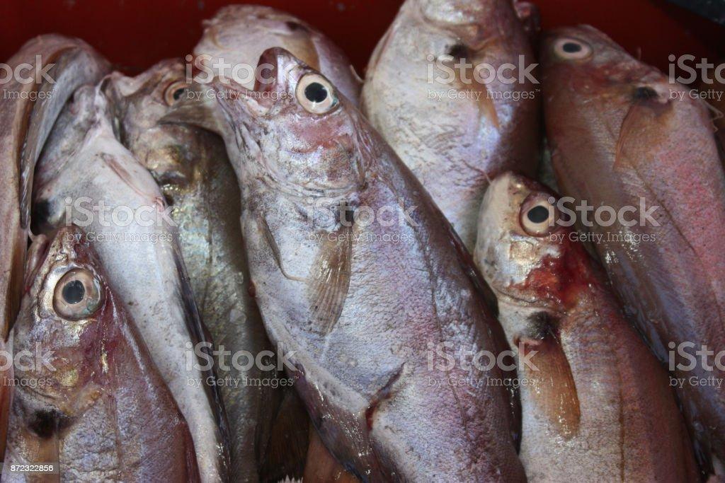 Mercado de peixe peixe de mar - foto de acervo