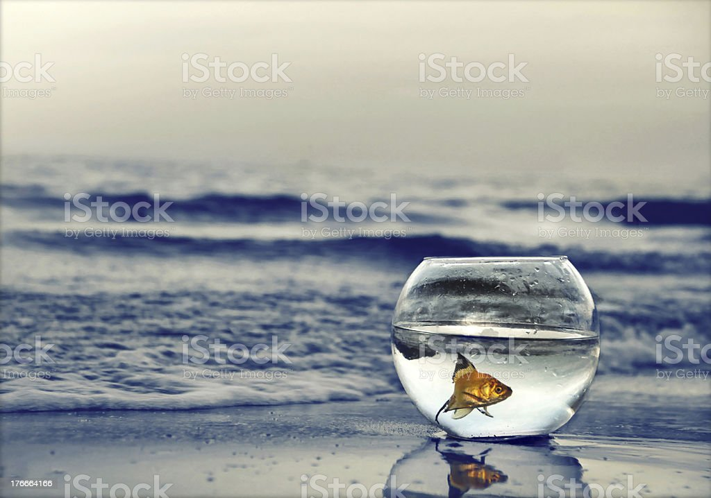 fish nature royalty-free stock photo