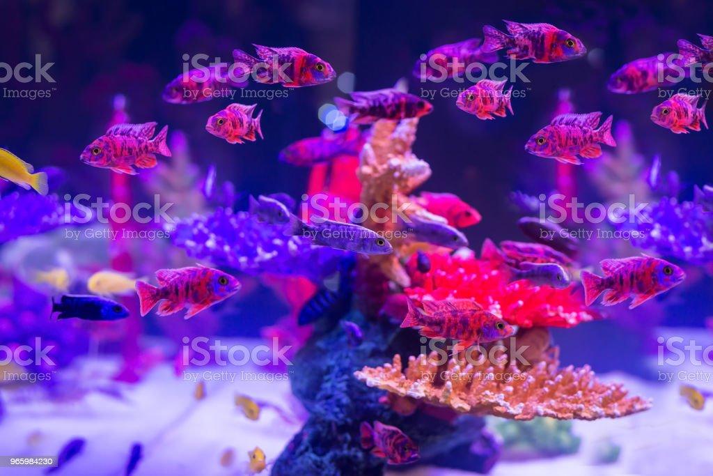 vissen in de buurt van koraal en een zee-anemoon in de ondiepe bodem - Royalty-free Avontuur Stockfoto