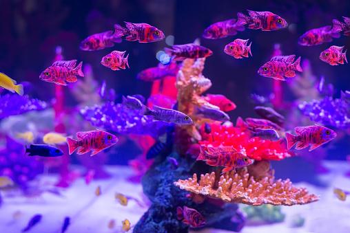 Vissen In De Buurt Van Koraal En Een Zeeanemoon In De Ondiepe Bodem Stockfoto en meer beelden van Avontuur