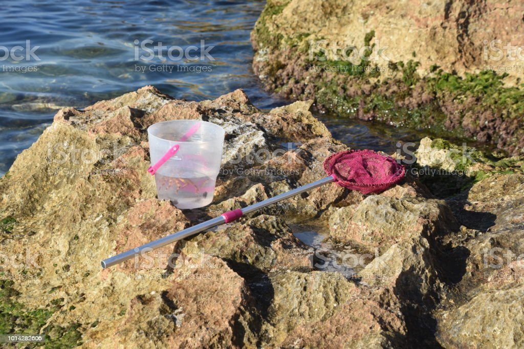 Fish net and bucket for fishING