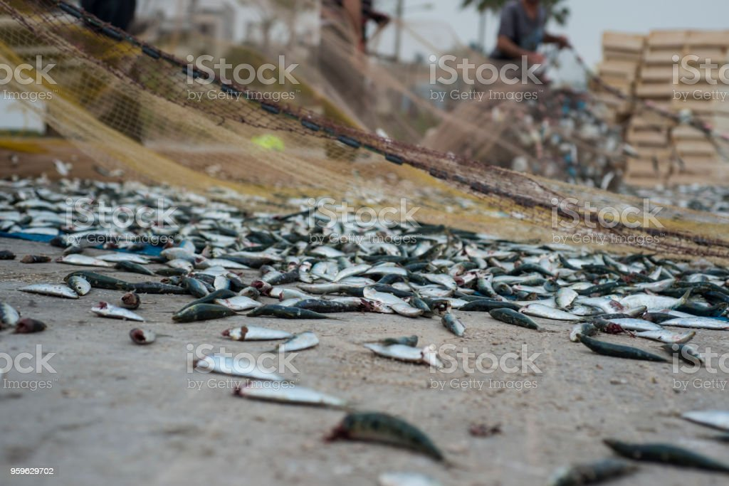 Red de los pescados y sardinas - Foto de stock de Agua libre de derechos