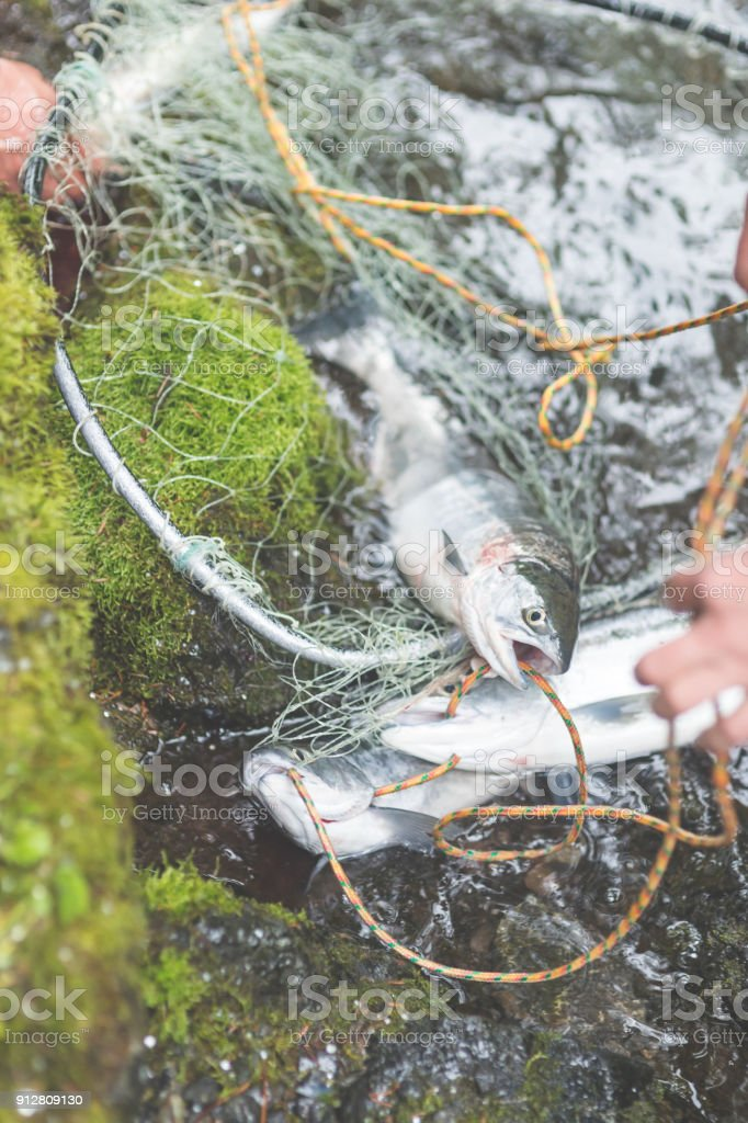 Fish net catch stock photo
