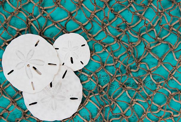 fish netzgewebe hintergrund mit sand dollar-collage - sanddollars stock-fotos und bilder