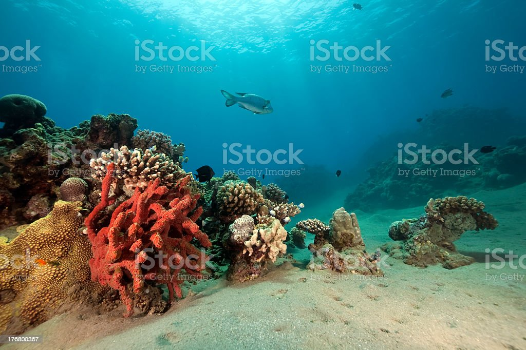 fish, ocean and sun royalty-free stock photo