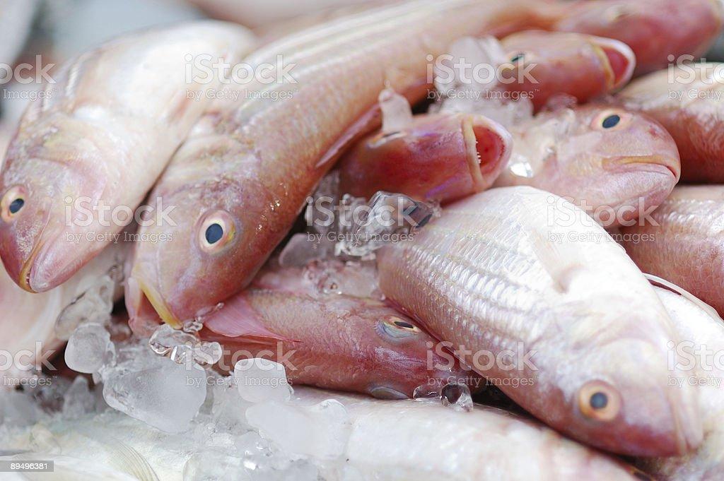 Fish on farmer's market royalty free stockfoto