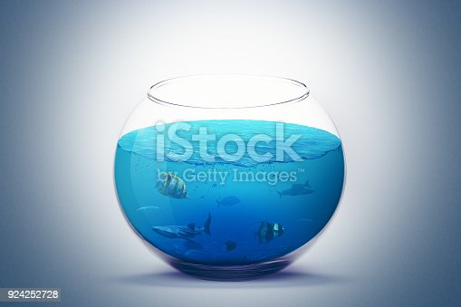 istock fish on fishbowl aquarium with sea water isolated on light background. 924252728