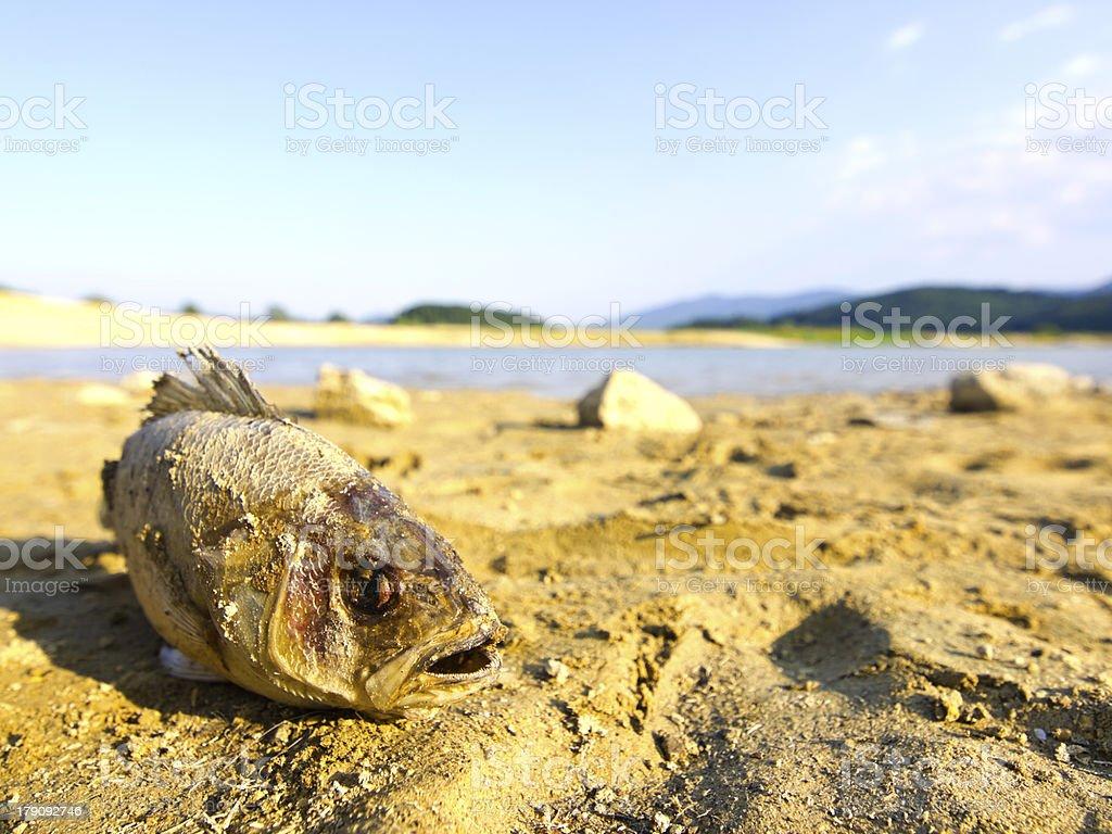 Fish on land royalty-free stock photo