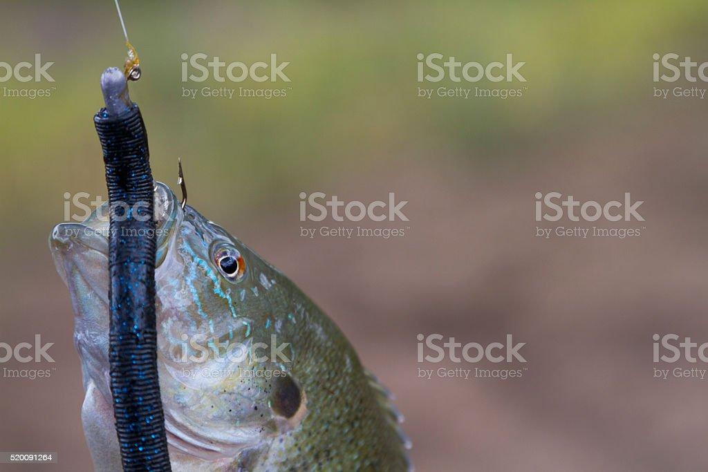 Fish On stock photo