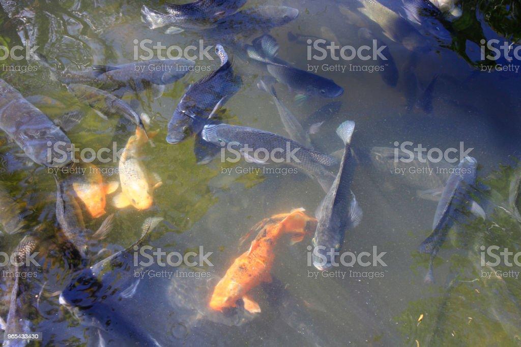 Pescar na lagoa - Foto de stock de Animal royalty-free
