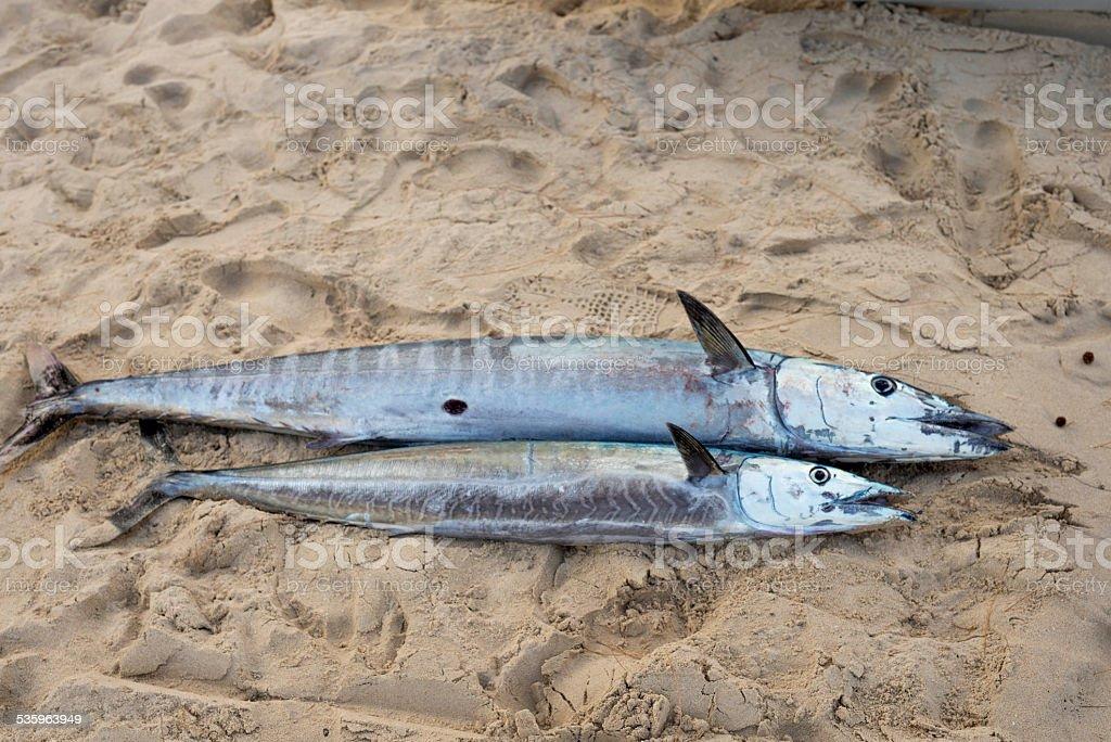 Peixe na praia - foto de acervo