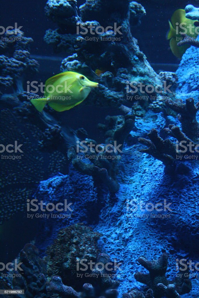Fish on the Reef stock photo