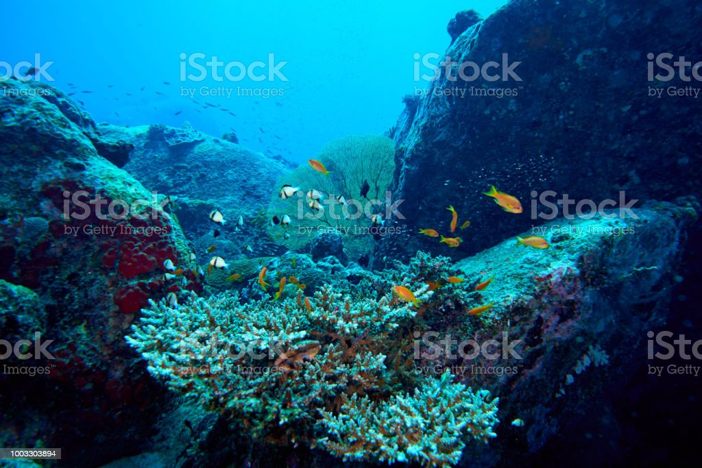 Fish on underwater coral reef stock photo