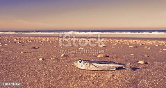 Fish Swimming Beach Sea Surrealism Gloomy Weather Copy Space