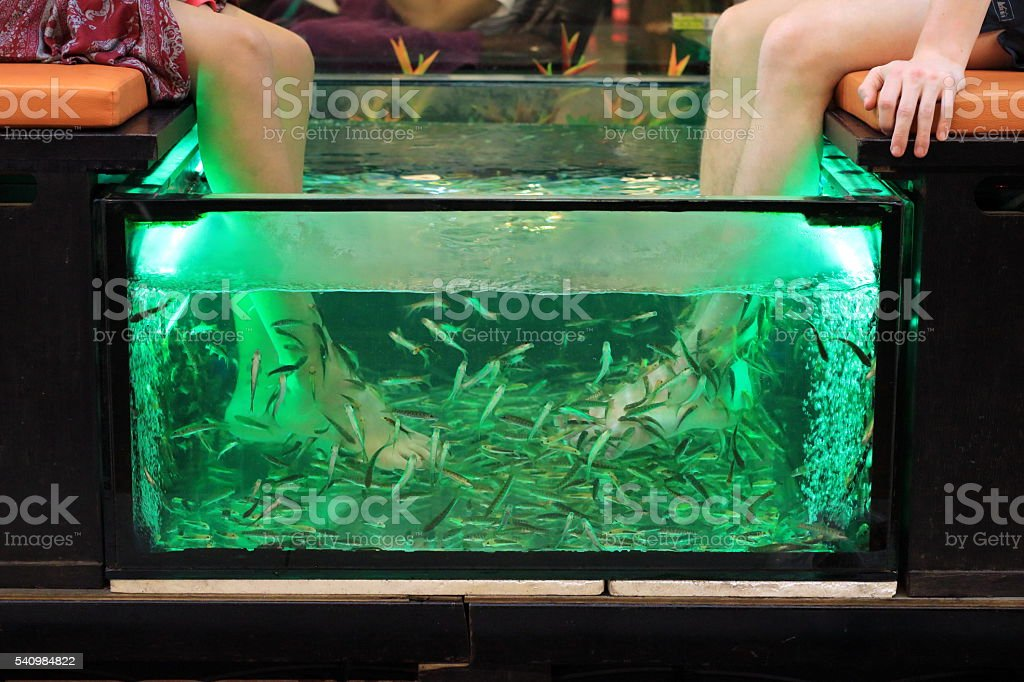 fish pedicure spa treatment - Garra rufa stock photo