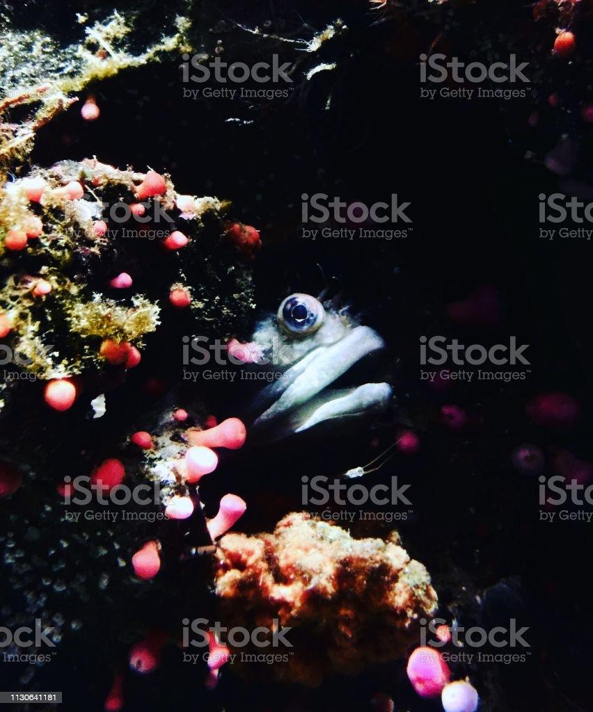 Fische aus Korallen ausweichen – Foto