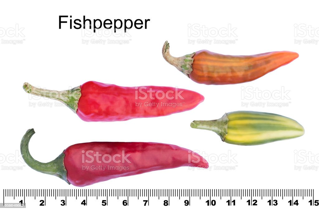 Fish Pepper Red Hot Chili Pepper From The United States Stock Photo