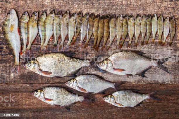 Fish Perches And Bream On Wooden Background - Fotografias de stock e mais imagens de Admirar a Vista