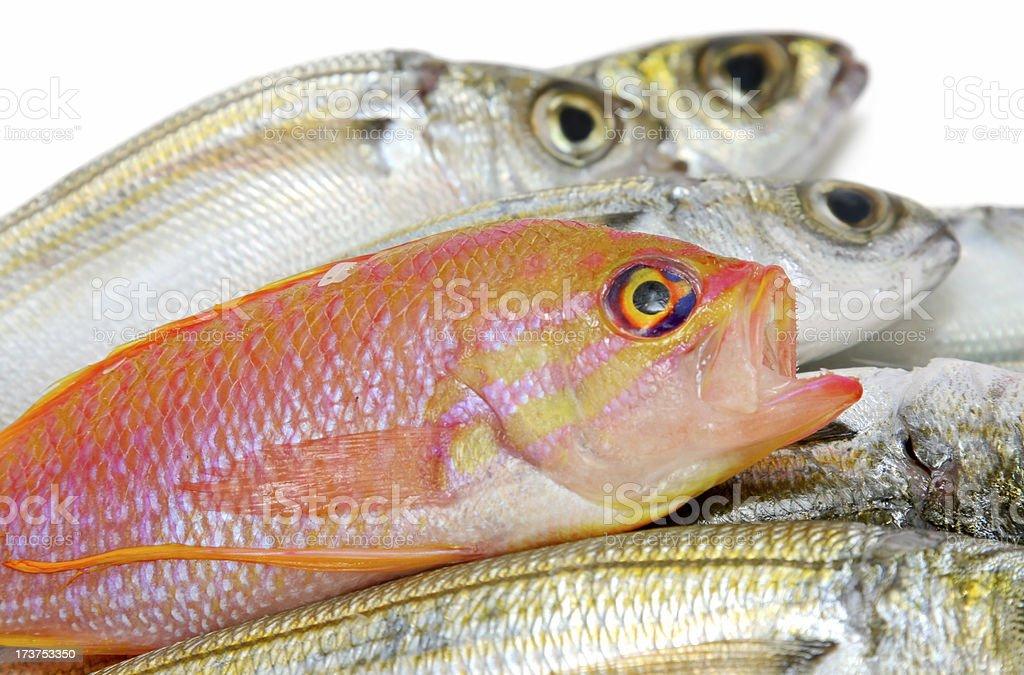 Pesce - foto stock