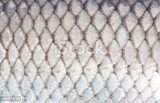 istock fish 469578188