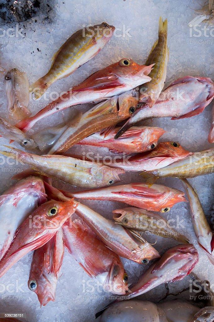 Pescado foto de stock libre de derechos