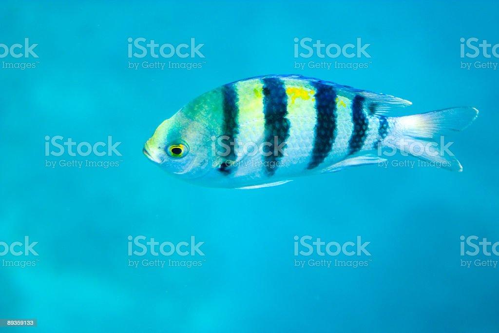 Pesce foto stock royalty-free