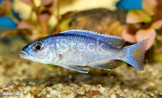 istock Fish 953467746