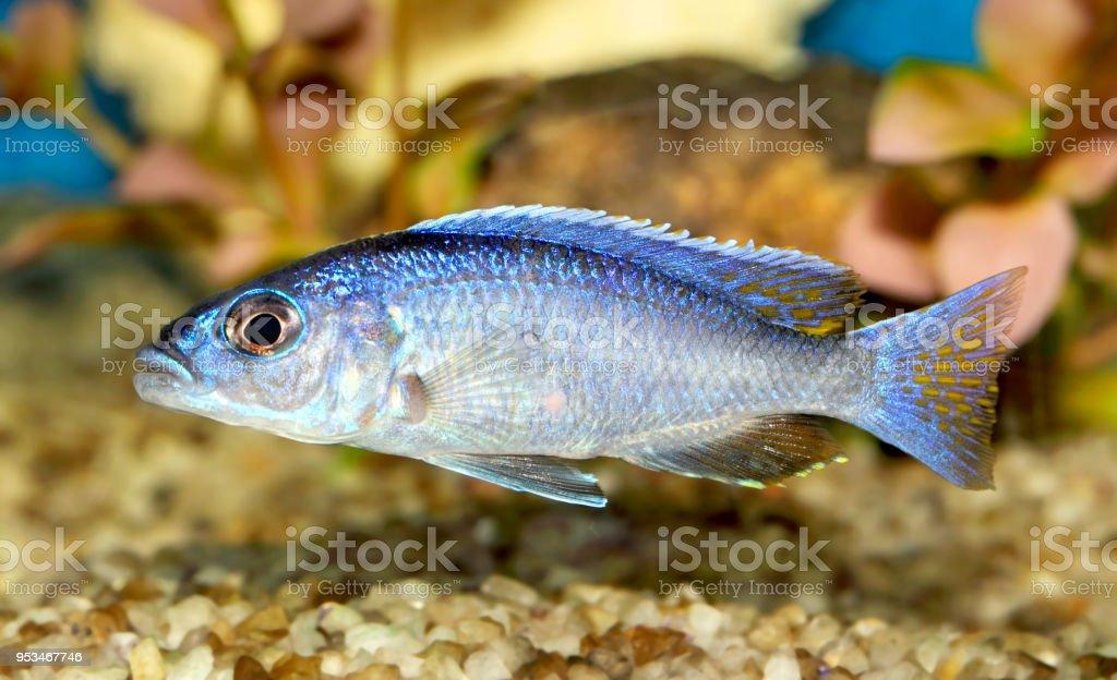 Fish  – Foto