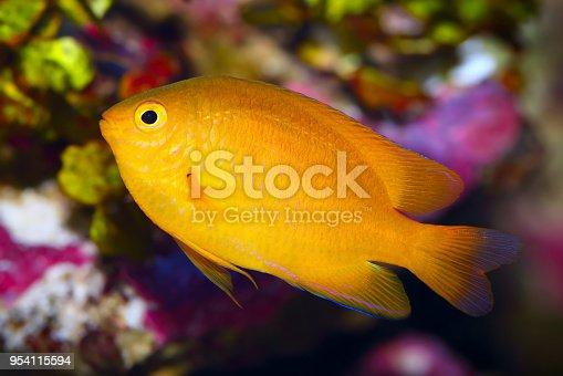 istock Fish 954115594