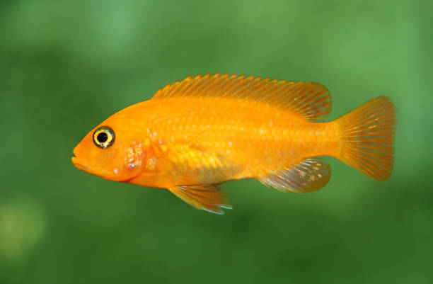 Fish Fish, close-up. nemo museum stock pictures, royalty-free photos & images