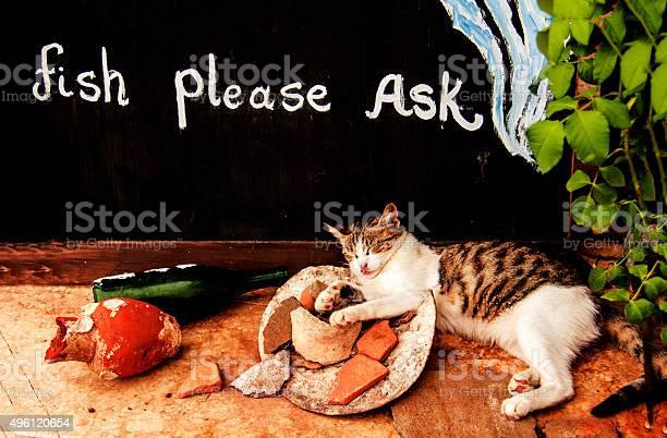 Fish please ask picture id496120654?b=1&k=6&m=496120654&s=612x612&h=ifnderzv6prhqnyr6aenydvfzlnrwbw ssyiuhyqasw=