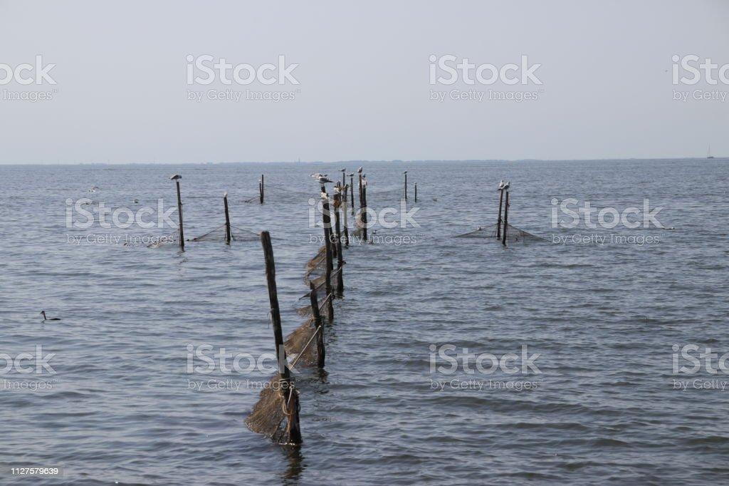 Vis peulen voor de vangst van aal in het IJsselmeer bij Urk in Nederland foto