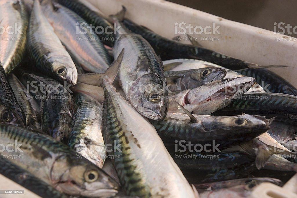 Fish ready for market royalty-free stock photo