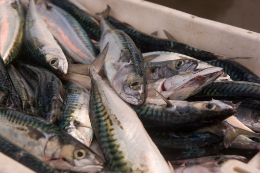 Fish ready for market