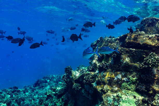 Fish Rush Hour at the Edge of the Reef, Big Island, Hawaii stock photo