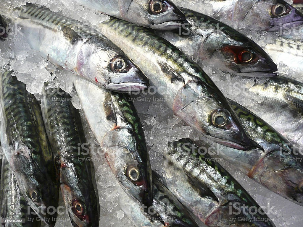 Fish, sardines stock photo