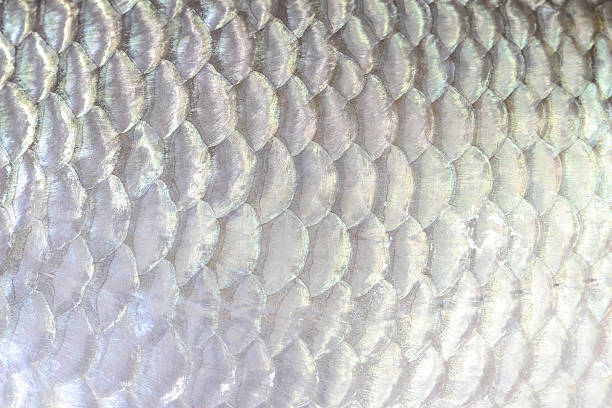 fish scale close up - animal markings stock pictures, royalty-free photos & images