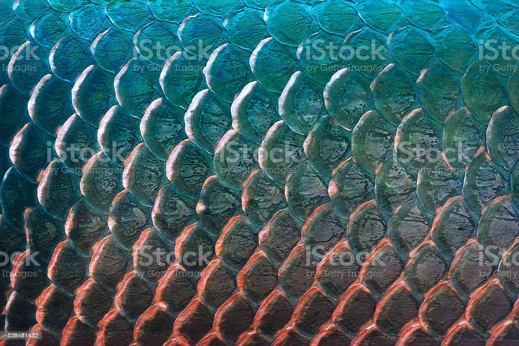 Fish scale texture for background, Colorful concept stock photo